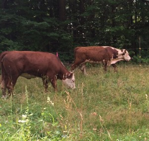 Lodging with Farm Animals in New London, NH